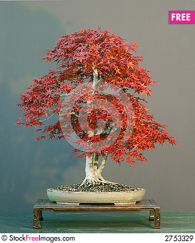 bonsai-picture